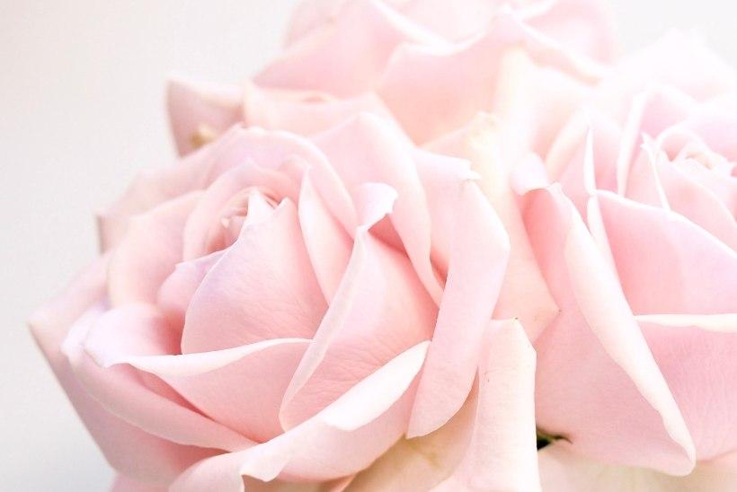 Lummavalt ilus ja äärmiselt tark lill: roos tõttab appi igale nahatüübile!