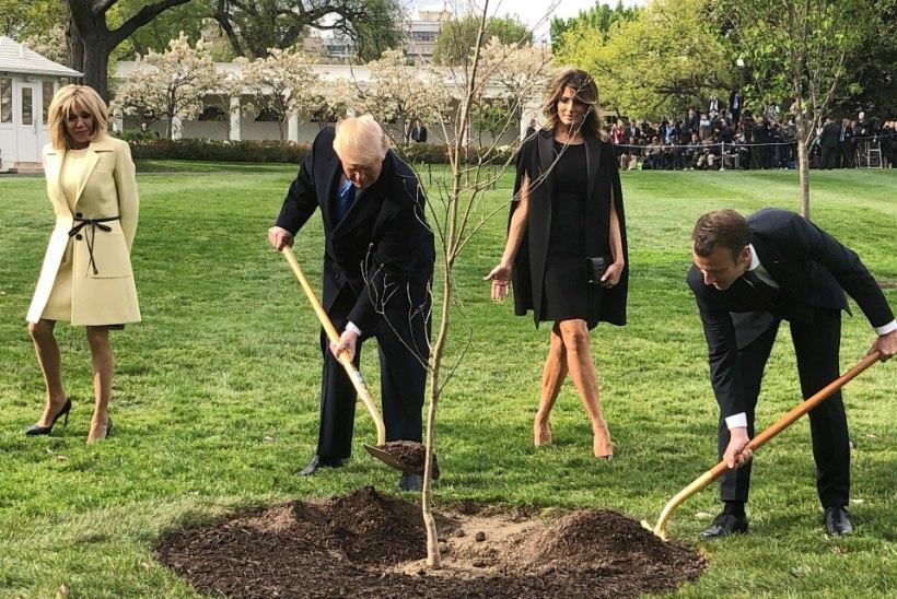 President Macroni Trumpile kingitud puu suri