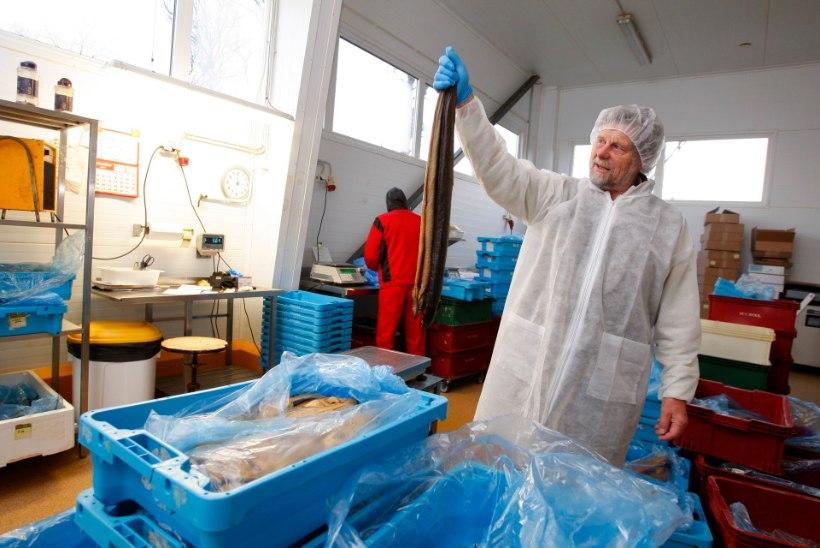 """Tapva bakteri jäljed jõuavad Eesti kalakuninga Vetevooluni: """"Aga mul ei ole süüd!"""""""