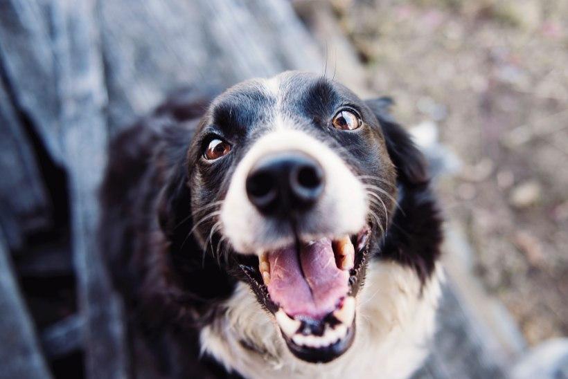 Väldi tõsisemaid muresid! 10 põhjust, miks lemmiklooma suuhügieenile regulaarselt tähelepanu pöörata