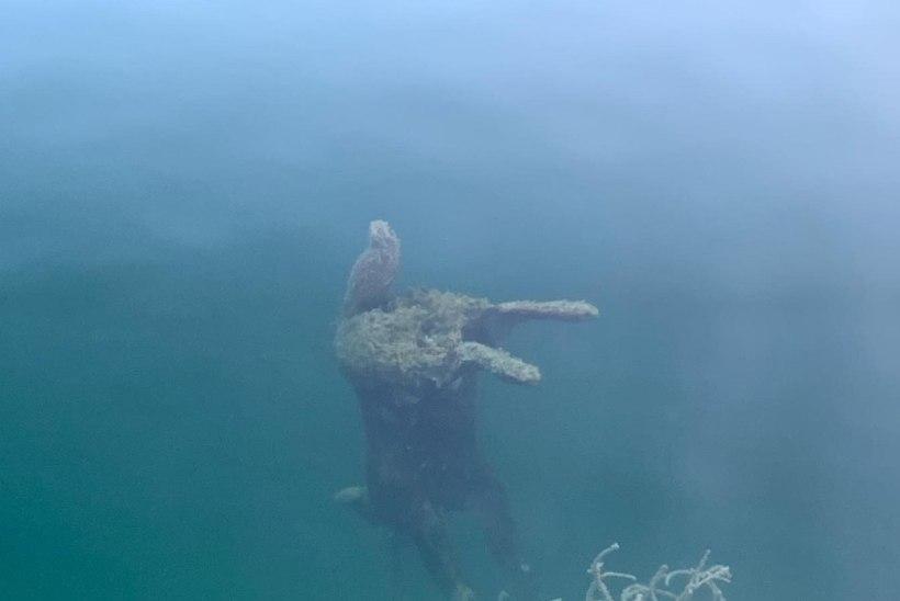 FOTOD | Ida-Virumaa karjäärist leiti ketiga kivi külge aheldatud loom. Kas tegu on kadunud hundiga?