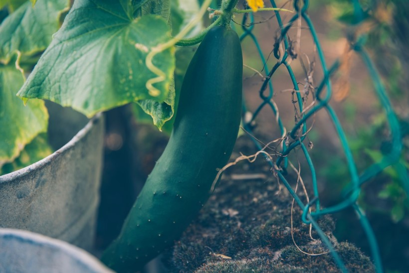 VIDEO | Tee taimedele kastmissüsteem!