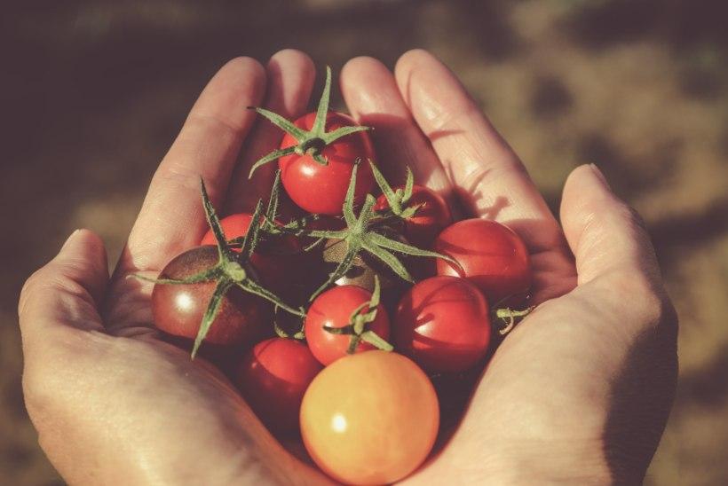 10 põhjust, miks küpsetest tomatitest isu täis süüa