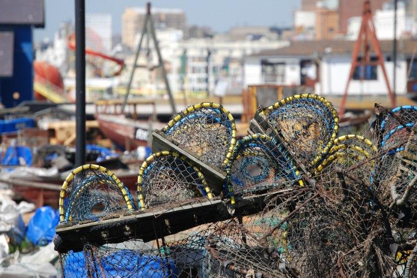 USA püüab vaalade kaitseks homaaripüüki piirata