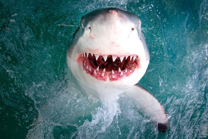 SURM PARADIISIS: kolm haid tapsid Bahama saarte rannikul noore snorgeldaja
