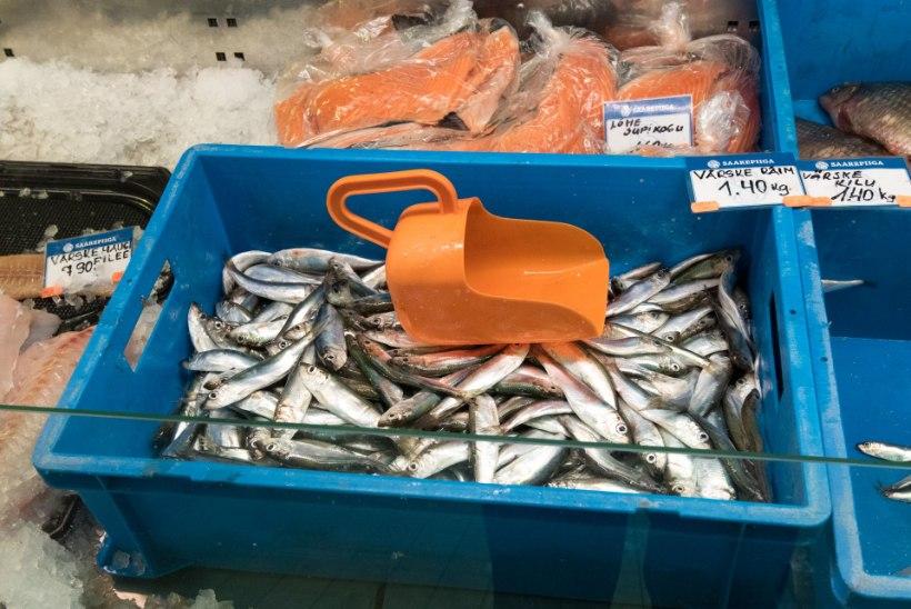 Mida püüavad merest Muhu kalurid?