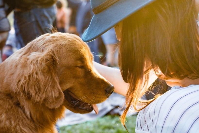 Kui lemmikloom toob rõõmu asemel allergia, saad abi nendest soovitustest!