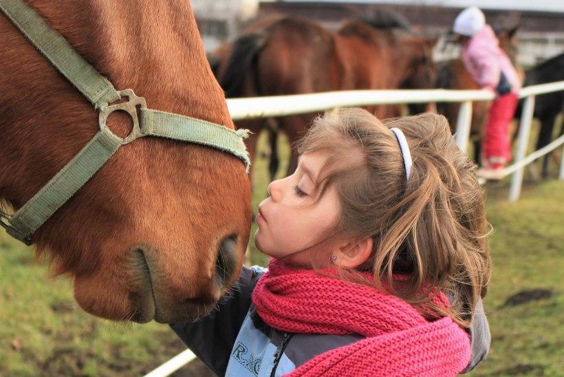 Lemmikloomaallergia: kust see tuleb ja kuidas leevendust leida?