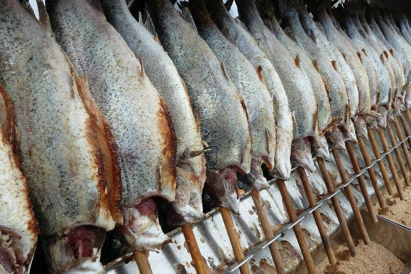 Raport: Põhjamere tursavarud on langenud kriitilisele tasemele