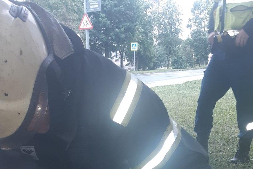 FOTOD | Tapa linnas põlenud korterist päästsid tuletõrjujad suure koera