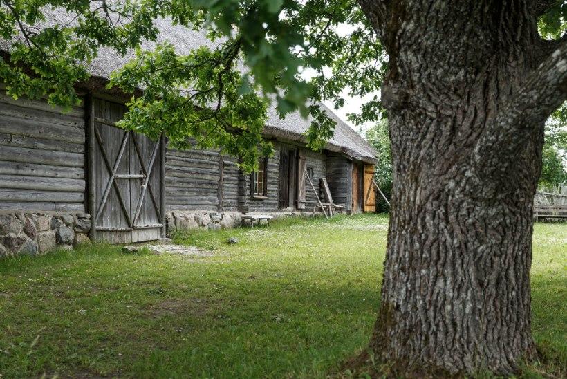 """Vargamäe radadel: Tammsaare muuseumisse """"Tõde ja õigust"""" otsima"""
