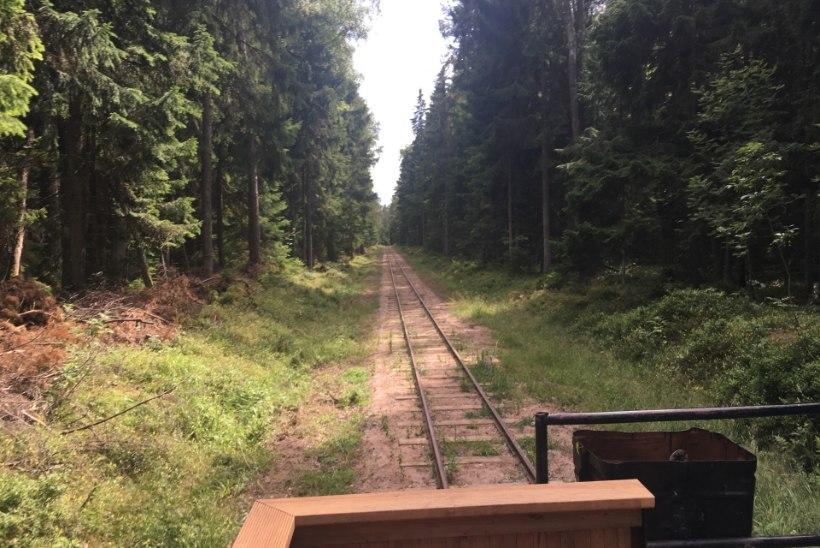 ÕL VIDEO | RÕÕMUSÕNUM: Naissaare maagiliste metsade vahel saab taas rongiga sõita