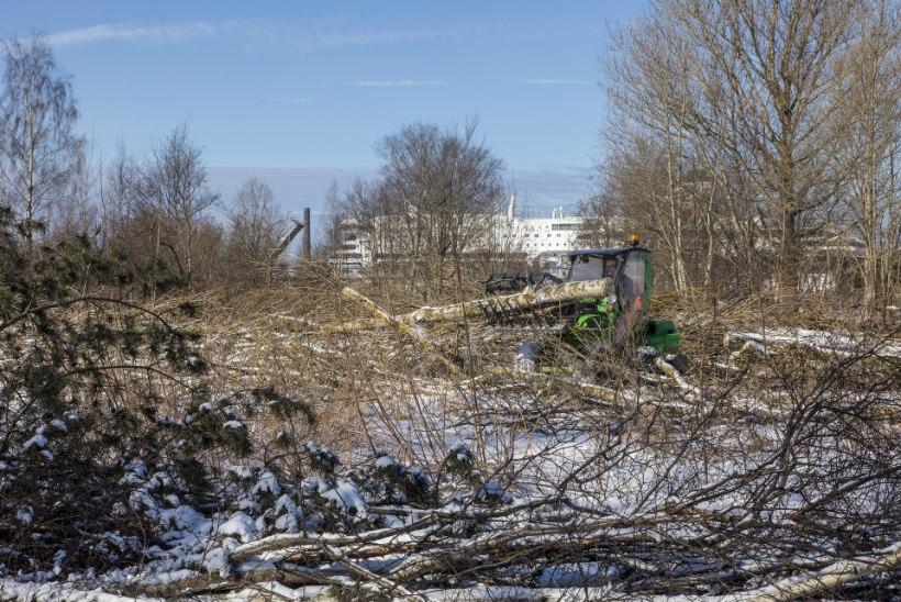 Reidi tee tõttu on raiutud 845 puud