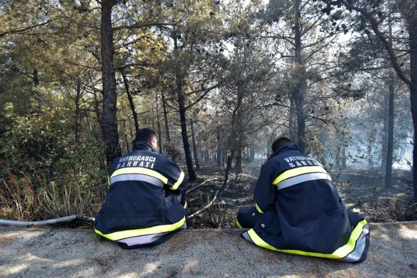 VIDEO | Metsatulekahju rikkus Horvaatias festivalikülastajate lõbusa peoõhtu