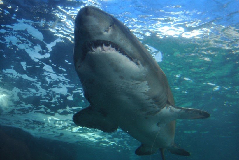 VETE HIRM: mida on hea teada haidest?