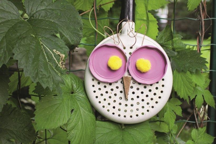 10 asjalikku nippi, kuidas linnud marjapõõsaste ja viljapuude juurest eemale peletada