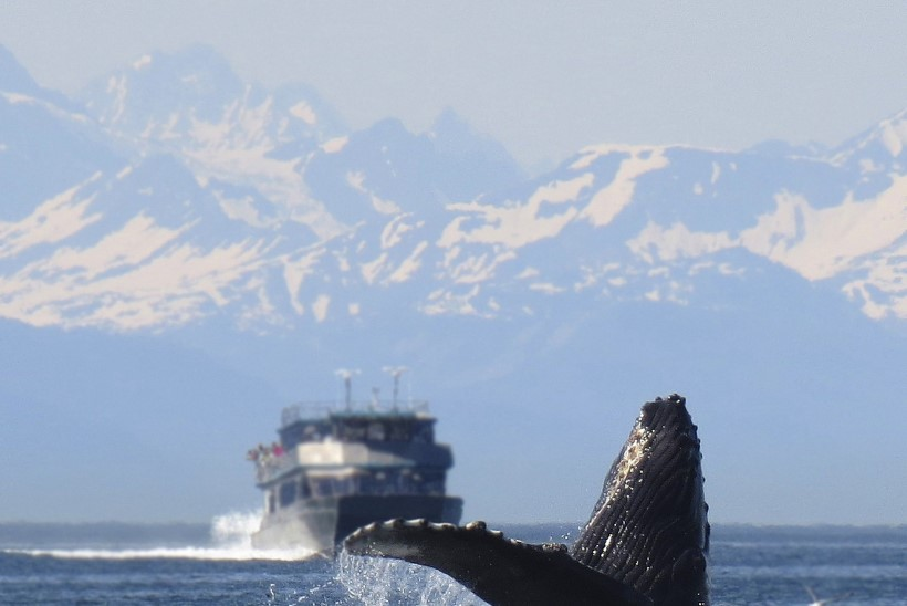 Islandi vaalapüüdjad jätavad tänavuse hooaja vahele