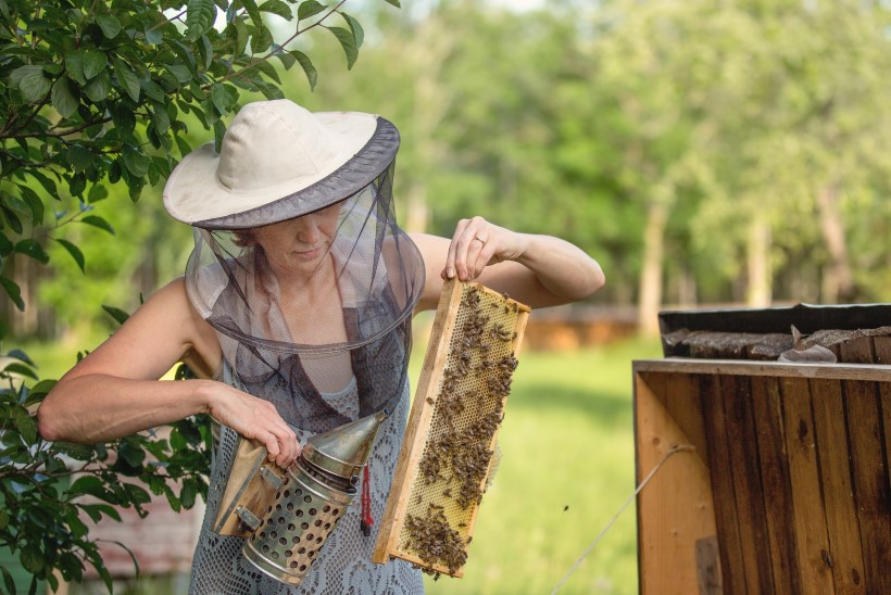 Mesinik Krista Kivisalu: mesilinde ei pea sugugi päriseks võtma – neid saab endale ka rentida!