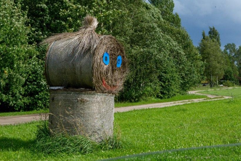 Ministri 80miljoniline üllatus põllumeestele: heinajääke ei peagi koristama