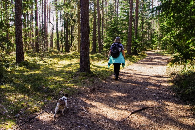 Kui tuttav rada kaob silmist: 7 nippi, kuidas seigelda metsas turvaliselt