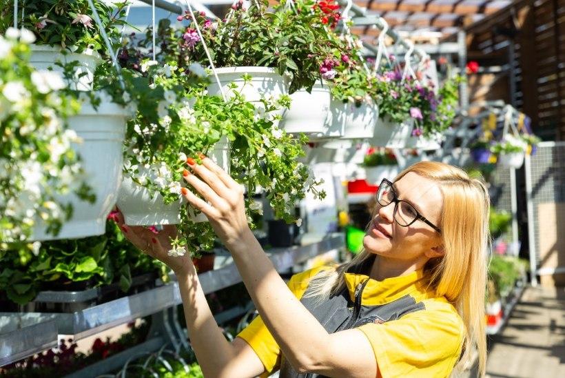 Tark aiaomanik majandab nutikalt igal aastaajal