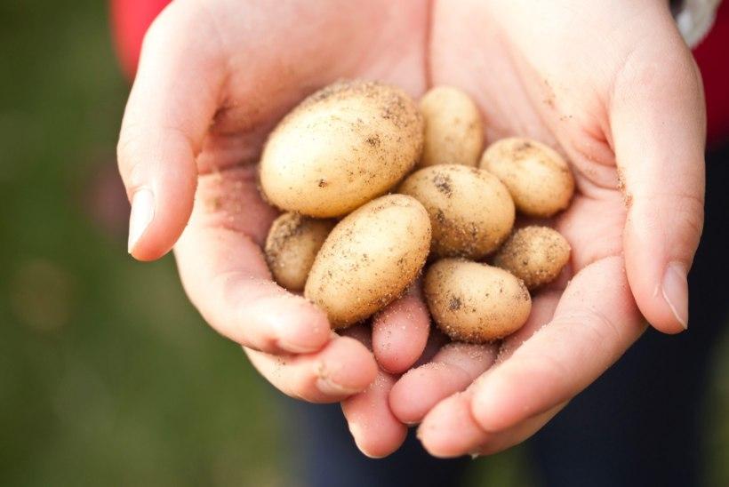 TÕDE VÕI VALE? Kas kartul teeb tõesti paksuks?