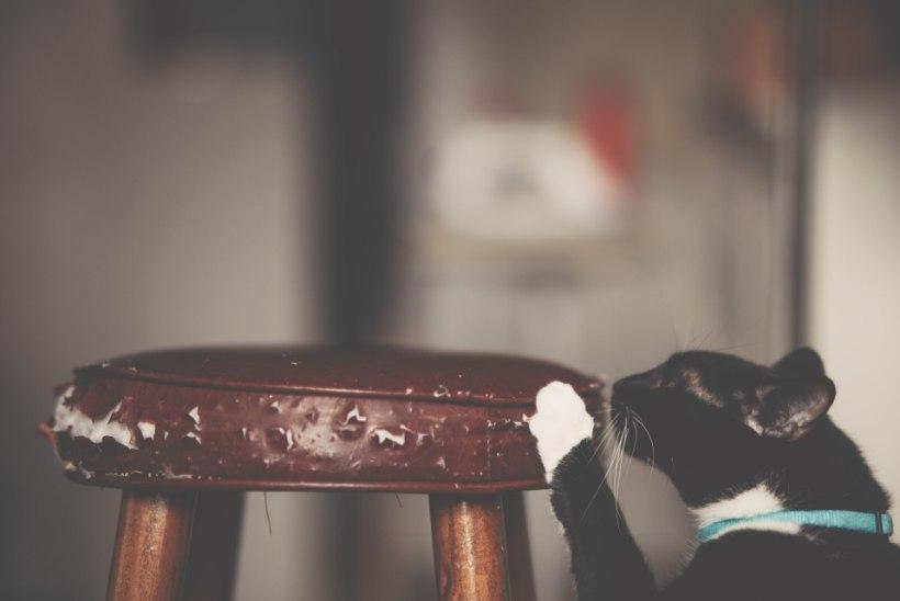 Peida võitlusjäljed! Nende nõuannete abil annad kassi kraabitud pehmele mööblile uue hingamise