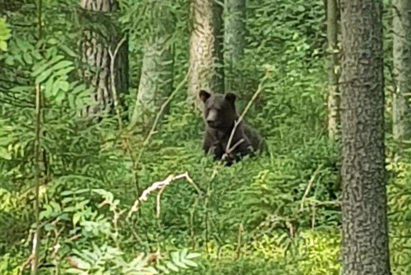VALGAMAA RAHVAS HIRMUL: karu Proša lõhub aknaid ega pelga isegi signaalrakette!