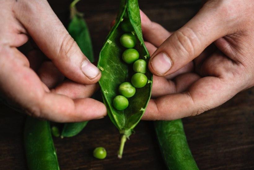 Aeg varuma hakata! Kuidas ise seemneid korjata ja säilitada?