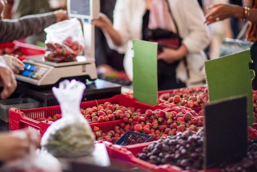 Süüdistatud maasikakasvataja: kõik on laim! Analüüsid näitasid, et mu põllud on puhtad