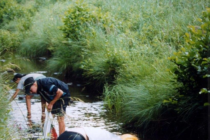 NATAD SISSE: kuni augusti lõpuni on lubatud jõevähki püüda