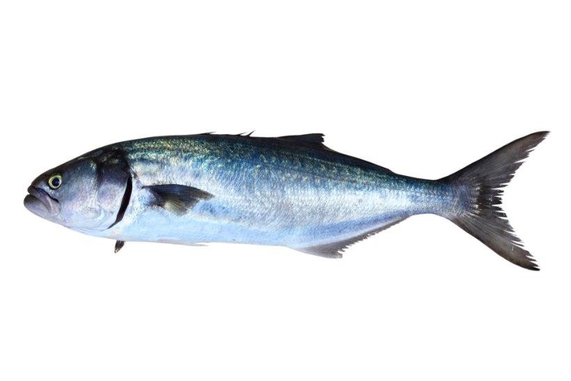 PUHKUS LÕPPES VERISELT: suplejat hammustas Vahemere rannas sinikala