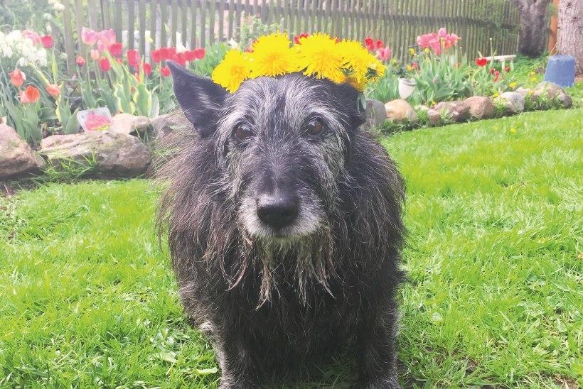 LEMMIK | Loomad, kes on saanud elus uue võimaluse