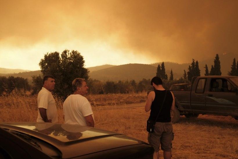 FOTOD | Kreeka saarel möllavas põlengus hävib haruldane männimets