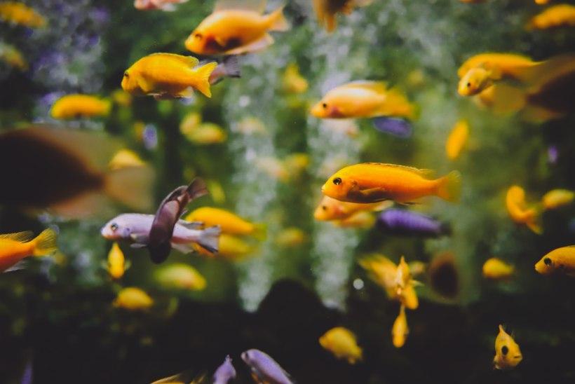 Kalad üksi kodus ehk Kuidas hoolitseda akvaariumi eest reisil olles?