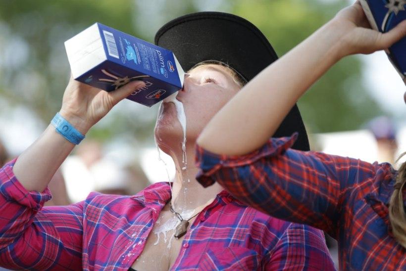GALERII JA VIDEO | Kantrifestival Mulgimaa rantšos: kes suudab juua kiiremini liitri sooja piima?