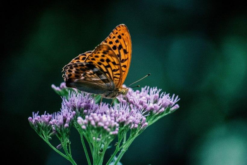 Toimetused aias: aeg on teha ettevalmistusi lähenevaks sügiseks