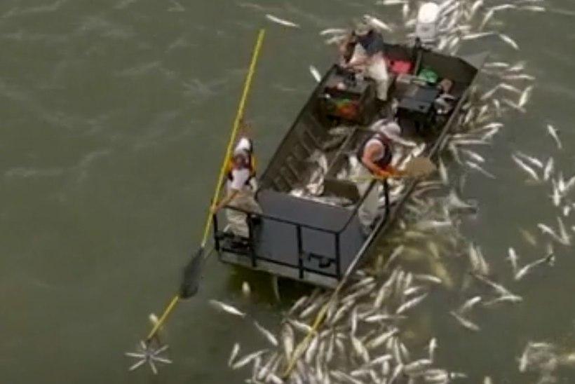 USKUMATUD KAADRID: keskkonnaametnikud püüdsid elektriga kala