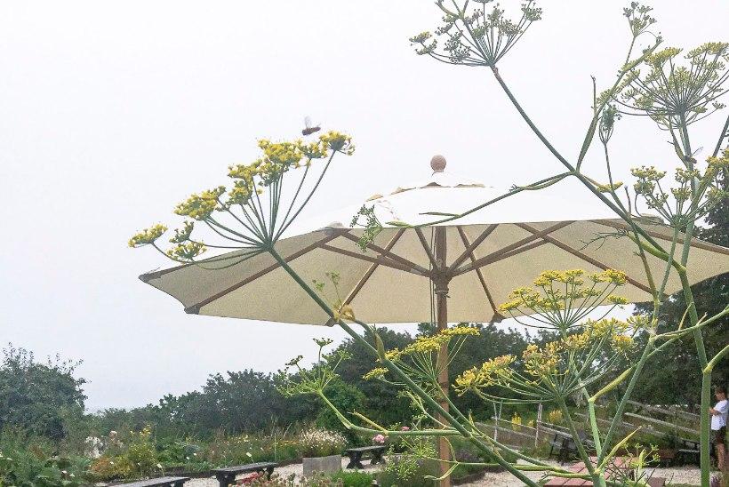 Publikumagnet: aed, kus taimede vägi on pakkunud elamusi juba pool sajandit
