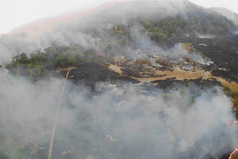 HULL TULELÕÕM: Amazonase tulekahjusid näeb isegi kosmosest