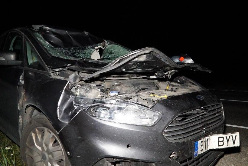 FOTOD | Järvamaal põrkas sõiduauto kokku põdravasikaga