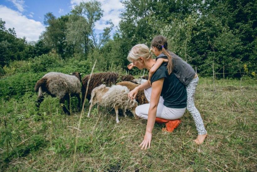 Heidi Hanso nõuanded, kuidas lapsi kodutöödesse kaasata
