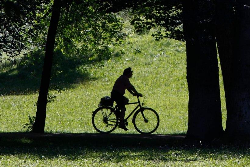 Eesti pätt varastas Saksamaal hirmkallid jalgrattad