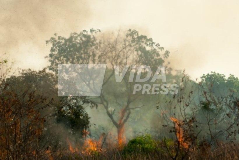Eesti teadlased: Brasiilia metsapõlengud teevad muret, kuid paanikaks pole põhjust