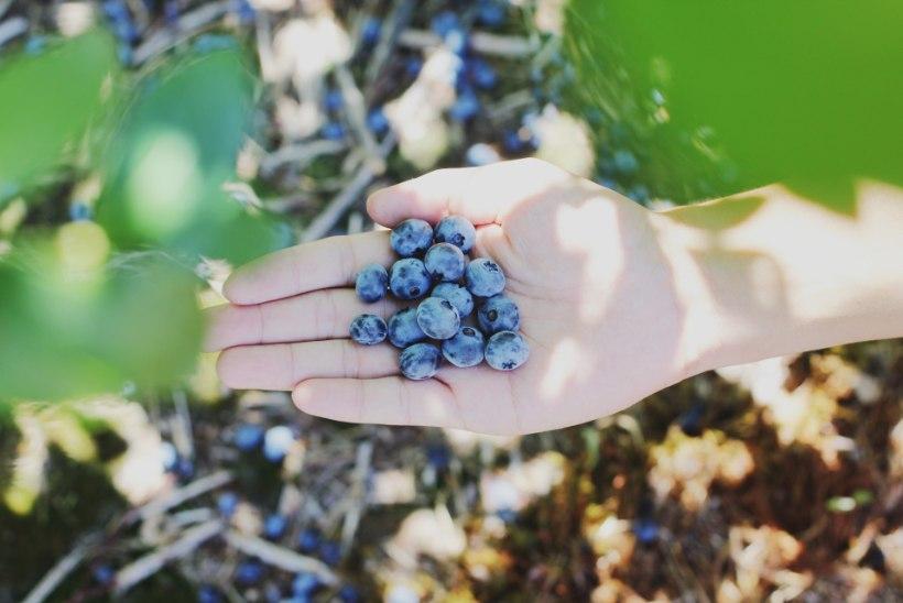 LUGEJA KÜSIB | Kuidas saada mustikatega määrdunud käed jälle puhtaks?
