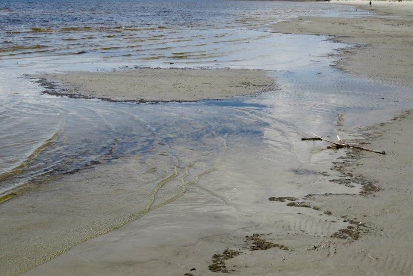 HOIATUS: Pärnu rannast leiti sinivetikaid