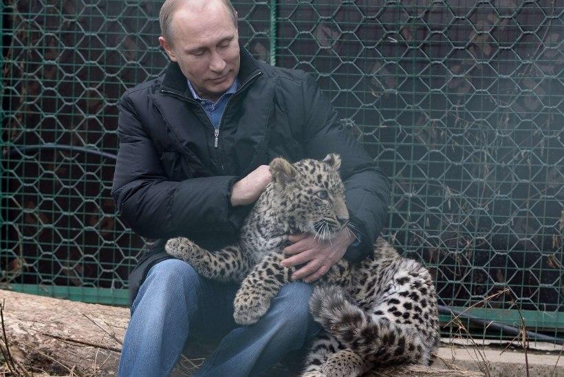 NATUKE NALJA: viis anekdooti Vladimir Putini vägitegudest