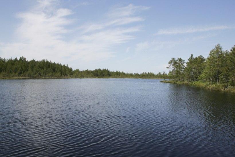 Kalamehe spikker: keda saab püüda Eestimaa väikejärvedest?