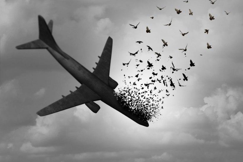 Linnurünnakud lennukitele on põhjustanud paljude inimeste hukkumist