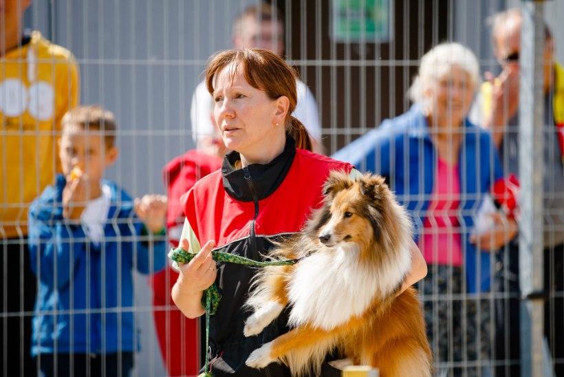 GALERII | NUNNUMEETER PÕHJA! Loomade varjupaik pidas sünnipäeva